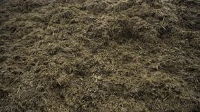 Close up for the pile of old grass and humus prepared for soil fertilization, agriculture concept. Footage. Biomass and. Close up for the pile of old grass and stock video