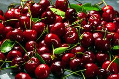 Close up of pile of ripe cherries with stalks and leaves. Large royalty free stock photo