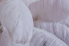 Close-Up of Pile of White Fluffy Feathers Royalty Free Stock Images