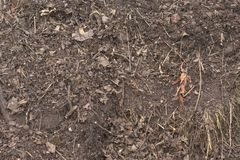 Close up of piled up dirt. Mixed with debris like grass clippings, leaves and small branches Stock Image