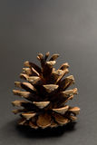 Close-up pine cone royalty free stock image