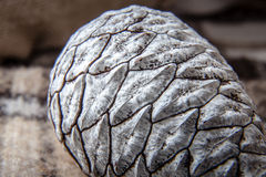 Close up of a pine cone Stock Image