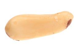 Close up of pine nuts. Macro. Royalty Free Stock Photo