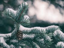 Close-up of Pine Tree in Forest during Winter Royalty Free Stock Photos