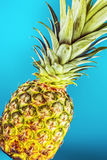 Closeup pineapple Stock Photo