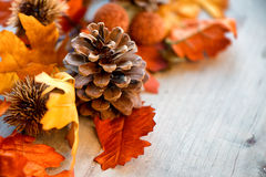 Close Up of Pinecone Amongst Autumn Leaves Stock Images
