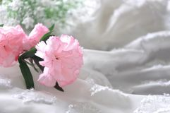 Pink Artificial Carnation on Chiffon Fabric Background Stock Images