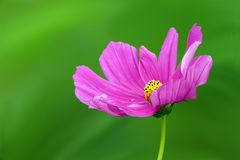 Close-up of Pink Flower Stock Photos