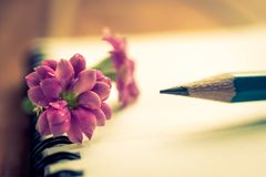 Close up pink flower , pencil and notebook on wood table.  Stock Images