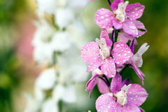 Close-up of pink flowers Stock Photography