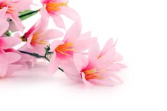 Close up of pink flowers. Isolated on a white background Royalty Free Stock Image