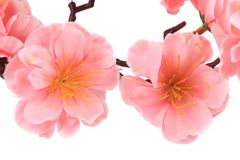 Close up of pink flowers. Isolated on a white background Stock Photo
