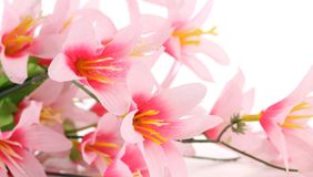 Close up of pink flowers. Whole background Stock Images