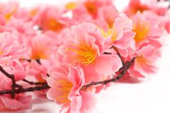 Close up of pink flowers. Whole background Royalty Free Stock Images