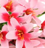 Close up of pink flowers. Stock Image
