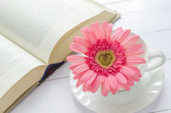 Close up of pink Gerbera flower at white cup Stock Images