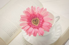 Close up of pink Gerbera flower at white cup Stock Image