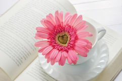 Close up of pink Gerbera flower at white cup Stock Photography