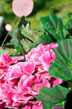 Close Up Pink and Green Flower. Close up of artificial pink flowers in the garden Stock Image