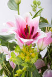 Close up of pink lily flower Stock Images