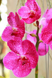 Close up of pink orchid.  Stock Photo