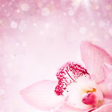 Close up on pink orchid on blured background Royalty Free Stock Images