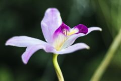 Close up of pink orchid stock photography