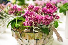 Close-up of pink orchids in a flowerpot. / Exhibition Keukenhof Nitherlands stock photo