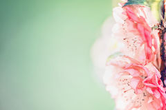 Close up of pink pale blossom at green nature background in garden or park, outdoor Stock Images