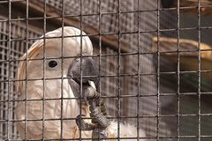 Close-up of the pink parrot`s clawed paw in the aviary royalty free stock images
