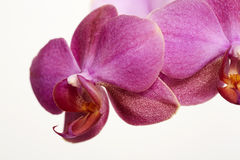Close up of pink petals Royalty Free Stock Images