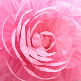 Close up Pink Rose Camellia Flower. Full Frame, Background. Stock Photography