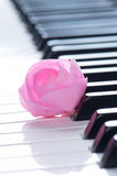 Close up of pink rose on the piano keyboard Stock Images