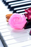 Close up of pink rose on the piano keyboard Stock Image