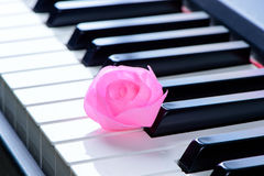 Close up of pink rose on the piano keyboard Royalty Free Stock Photo