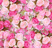 Close up pink roses background Stock Photography
