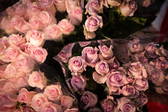 Close-up of pink roses. At flower shop Stock Images