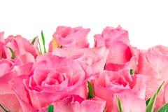 Close up of pink roses Stock Photos
