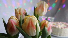 Close up of pink yellow tulips or tulipa spring flowers buds, heads in garden of Amsterdam, Holland, Netherlands. Tulips stock video footage