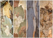 Close up of plane tree barks Royalty Free Stock Photos