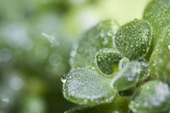 Close-up of a plant covered by raindrops Stock Photo