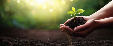 Plant in Hands. Ecology concept. Nature Background royalty free stock photo