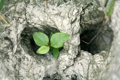 Close-up of plant between rocks. Close-up of green plant between rocks Royalty Free Stock Photography