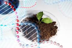 Close up of plant and soil in lab Royalty Free Stock Photos