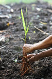Close up of planting Royalty Free Stock Image