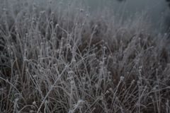 Close-up of plants covered by frost on cold early autumn morning. Beautiful bokeh, shallow depth of field Stock Photography