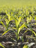 Close-up of plants in soil Stock Photography