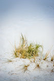 Close up of plants in White Sands National  Park Stock Photos