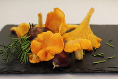 Close up of plate of organic vegan fresh harvested mushrooms chanterelle and chestnuts Stock Photography