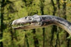 Close Up of Plesiosaurus Model Stock Photos